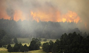 the-black-forest-fire-burns-behind-a-stand-of-trees-on-june-12-near-colorado-springs